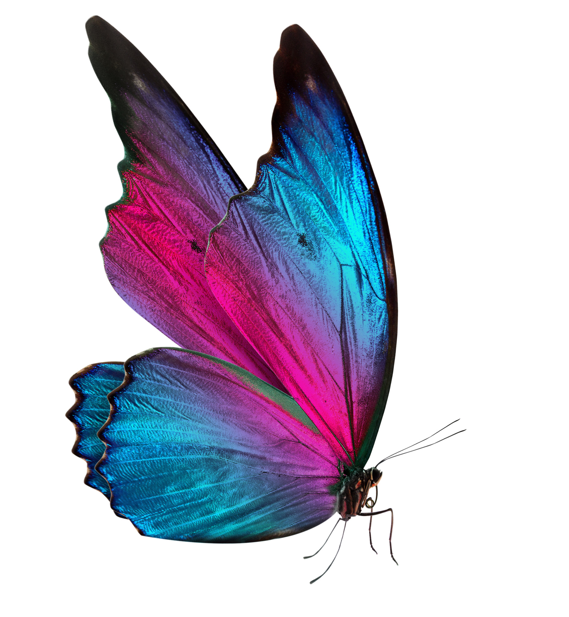 Puple And Blue Butterfly Transformation Spiritquest Retreats